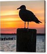 Watch The Birdie Canvas Print