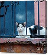Watchful Cat, Mexico Canvas Print