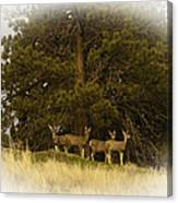 Watchful Eyes 2 Canvas Print