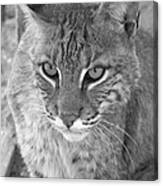 Watchful Eyes Black And White Canvas Print