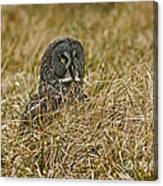 Watchful Eyes Of The Great Gray Owl Canvas Print