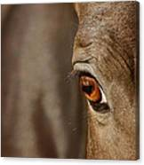 Watchful Canvas Print