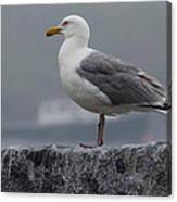 Watchful Seagull Canvas Print