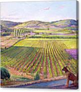 Watching From The Walls Old Provence Canvas Print