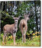 Watching Out For Mom Canvas Print