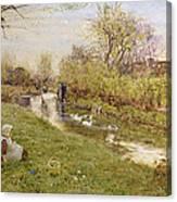 Watching The Ducks Canvas Print