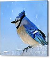 Watching The Snow Canvas Print
