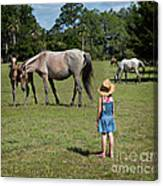 Watching The Wild Horses Canvas Print