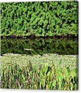 Water And Green Canvas Print