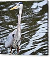 Water Bird Canvas Print