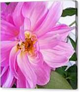 Water Color Dahlia Canvas Print