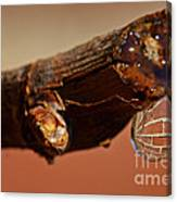 Water Drop On A Branch Canvas Print