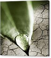 Water Drop On Green Leaf Canvas Print