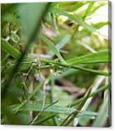 Water Droplet On Grass Blade Canvas Print