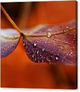 Water Droplets On Red Autumn Leaf Canvas Print