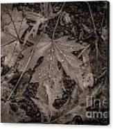 Water Drops On Fallen Leaves Canvas Print