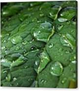 Water Drops On Leaf 1 Canvas Print