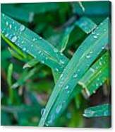Water Drops On The  Grass 0004 Canvas Print