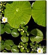 Water Drops Bristol Rhode Island Canvas Print