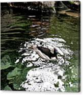 Water Duck Canvas Print
