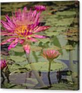 Water Garden Dream Canvas Print
