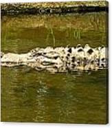Water Gator Canvas Print