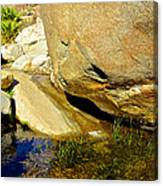Water In Oasis On Borrego Palm Canyon Trail In Anza-borrego Desert Sp Campground-ca  Canvas Print