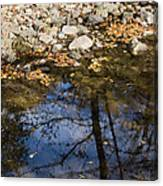 Water Leaves Stones And Branches Canvas Print