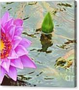 Water Lilies 001 Canvas Print