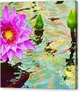 Water Lilies 002 Canvas Print