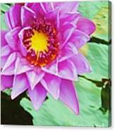 Water Lilies 003 Canvas Print