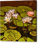 Water Lilies Img_6388 Canvas Print