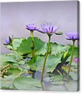 Water Lilies Of Vietnam Canvas Print
