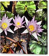 Water Lilies Water Drop And Reflection In Water Canvas Print