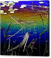 Water Lillies Canvas Print