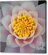 Water Lillies Macro Canvas Print