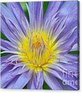Water Lily 16 Canvas Print