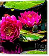 Water Lily 2014-12 Canvas Print