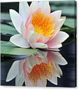 water lily 45 Water Lily with Reflection Canvas Print
