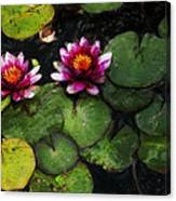 Water Lily Acanthius Canvas Print