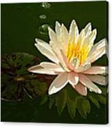 Water Lily And Pad Canvas Print