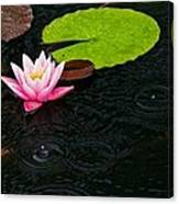 Water Lily And Raindrops Canvas Print