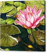 Water Lily At The Biltmore Gardens Canvas Print