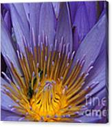 water lily from Madagascar Canvas Print