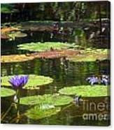 Water Lily Garden 2 Canvas Print