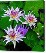 Water Lily IIi Canvas Print