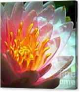 Water Lily In The Sun Canvas Print