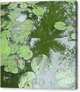 Water Lily Leaves And Palm Trees Canvas Print