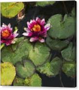 Water Lily Neo Canvas Print