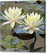 Water Lily Pair Canvas Print
